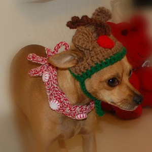 Peppermint Christmas Dog Collar Allfreecrochetcom