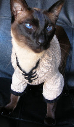 Lucky cat sweater - Knitted cat sweater pattern ...