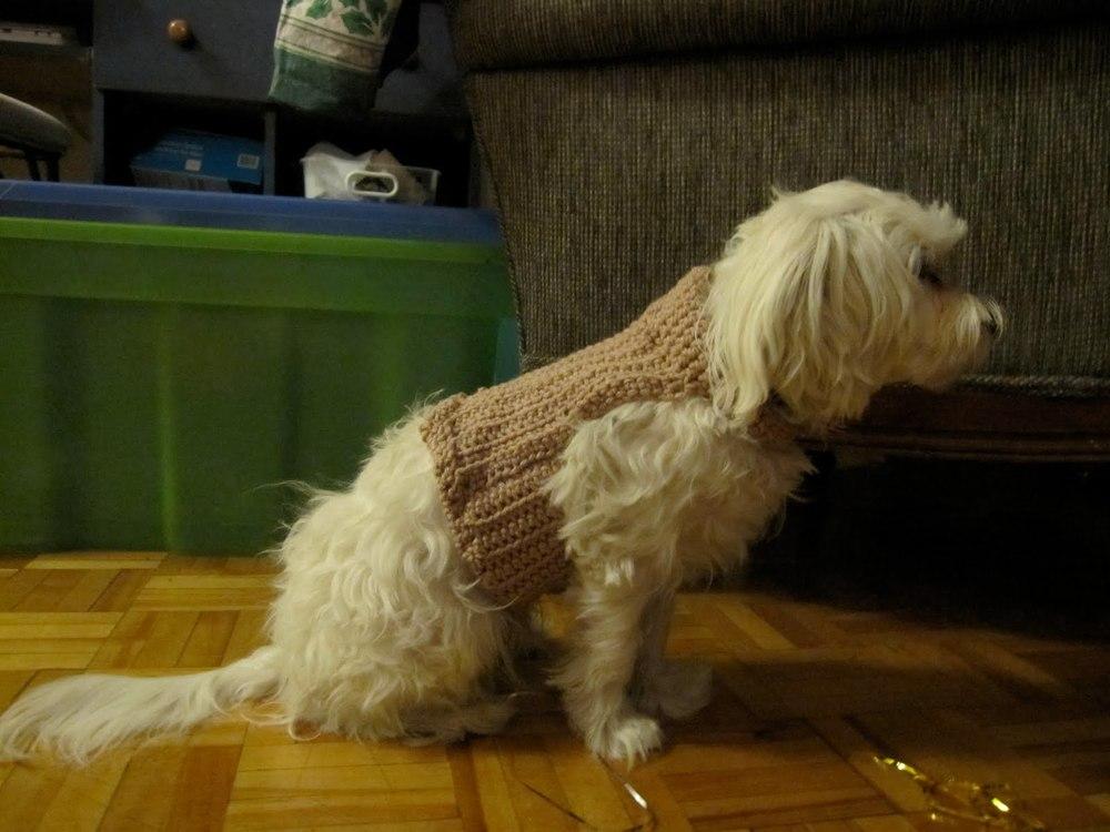 Doggie Sweater | AllFreeCrochet.com