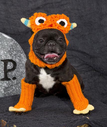 Free Crochet Patterns For Dog Halloween Costumes : Ferocious Pooch Costume AllFreeCrochet.com