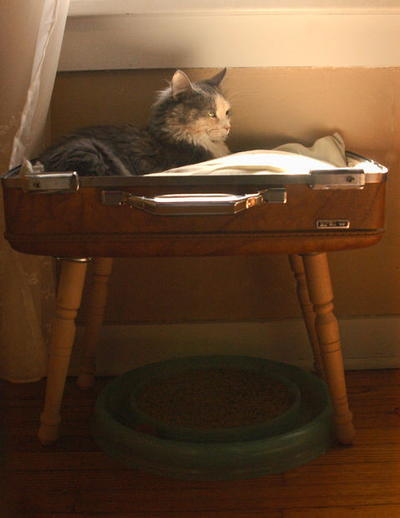Stylish and simple suitcase pet bed for How to make a cat bed easy