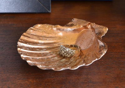 Seashell Jewelry Holder