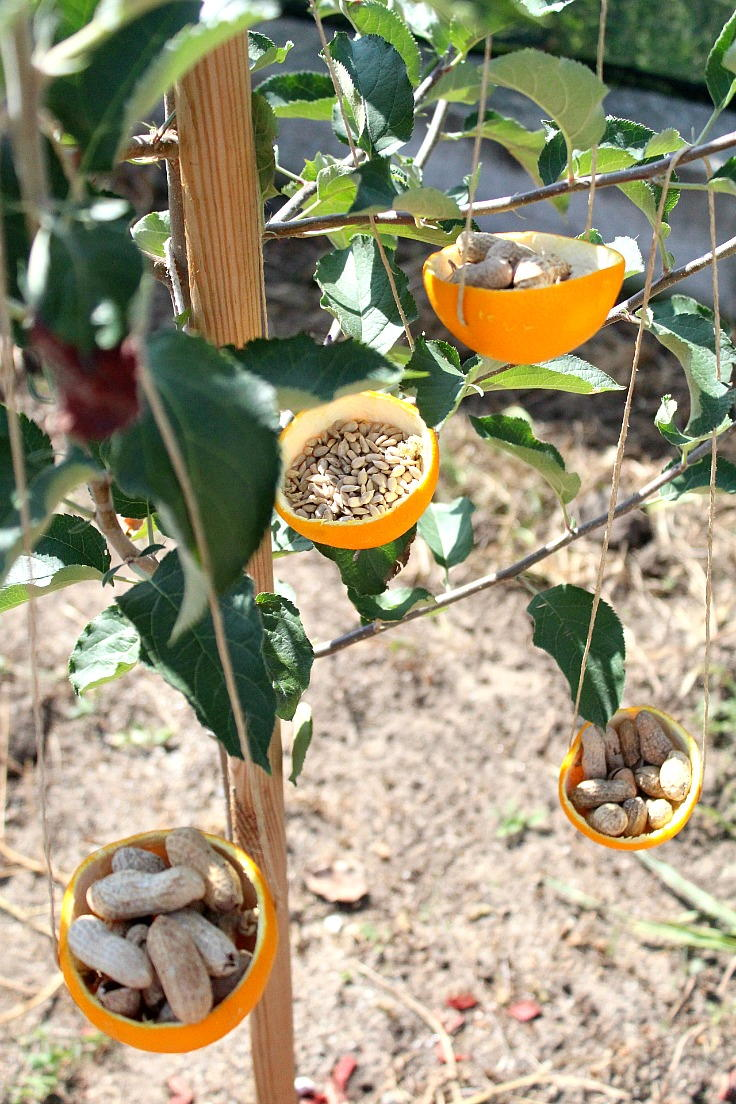 Orange Peel Diy Bird Feeders Favecrafts Com
