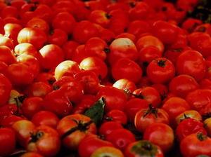 Hot Hot Tomato Chutney
