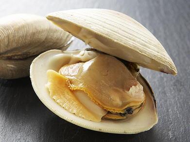 「clam」の画像検索結果