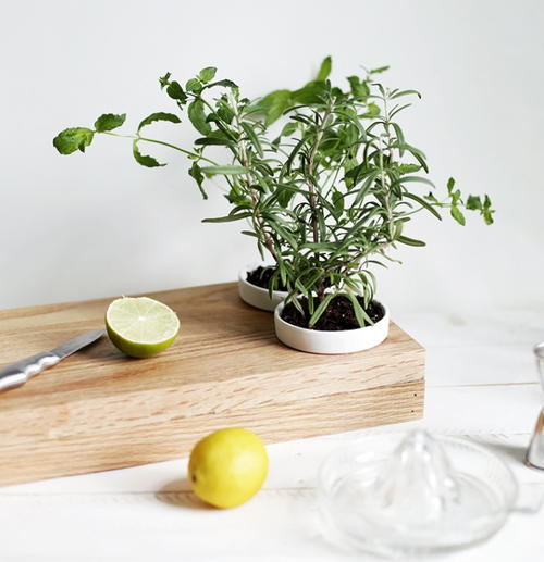 how to grow herb from cutting