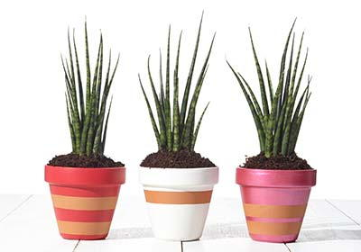 Striped Flower Pot Crafts