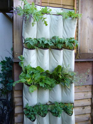 """Grow Up"" Herb Garden"