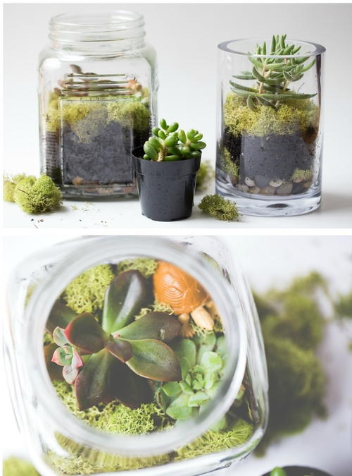 Too Easy Succulent Terrariums