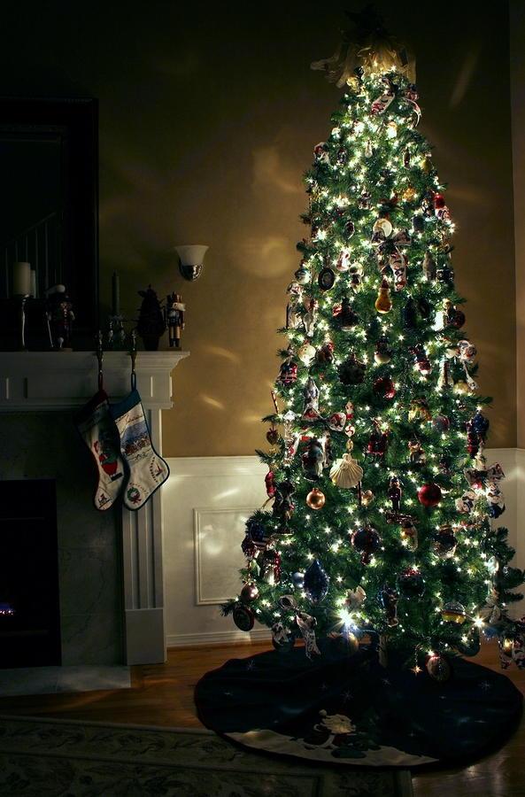 How To Keep A Christmas Tree Alive Christmas Tree Tips