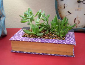 Nook in a Book DIY Succulent Planter