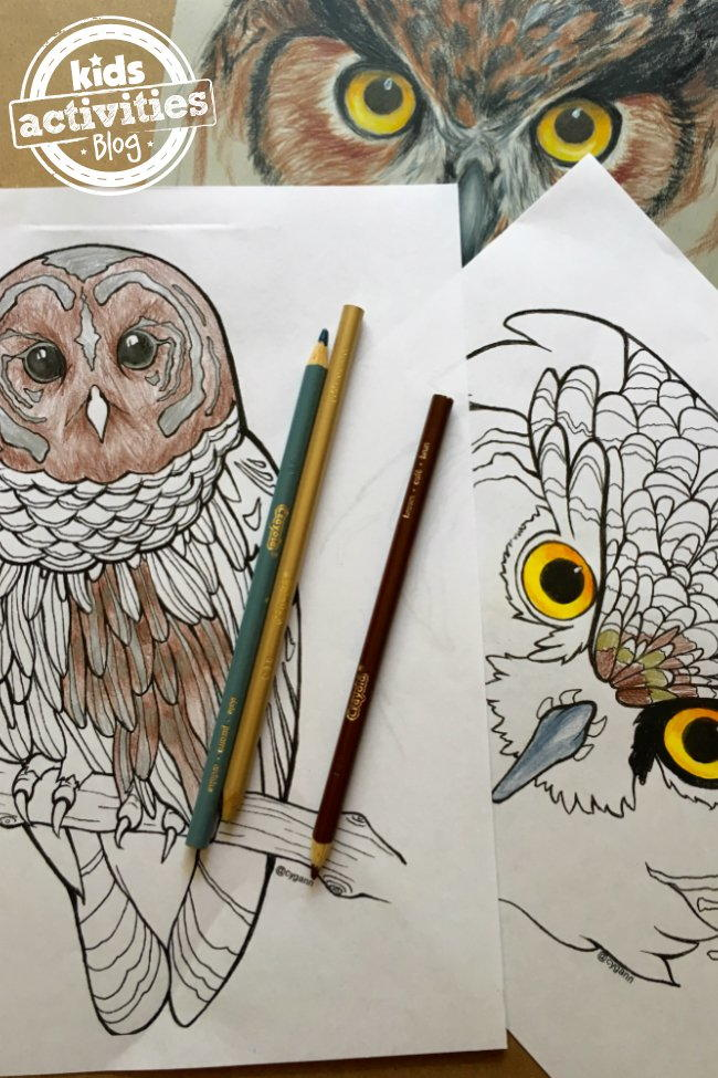 Realistic owl coloring pages for Peacock crafts for adults