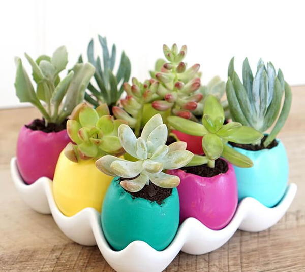 DIY Egg Shell Planter
