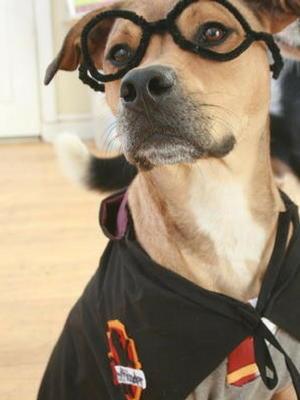 Harry Potter Dog Halloween Costumes.Harry Potter Dog Costume Allfreeholidaycrafts Com