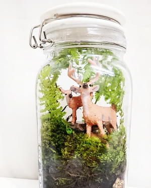 DIY Mason Jar Terrarium Tutorial