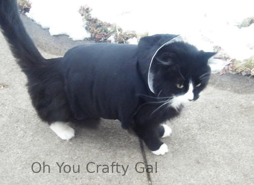 Kitty's Favorite Winter Coat