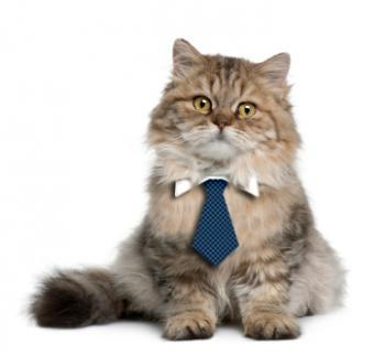 Business Cat Tie Pattern