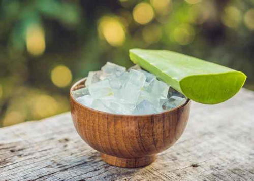Frozen Aloe Vera Cubes For Sunburn Relief