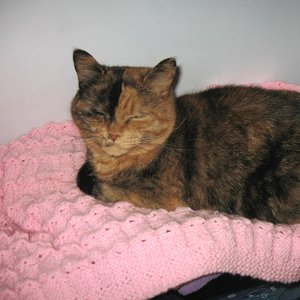 Cat Blanket Knitting Pattern