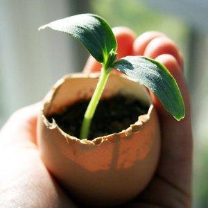 Eggshell Seedling Planters