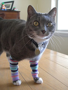 Unforgettable Kitty Leg Warmers