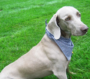 Quick Draw McGraw Puppy Bandana