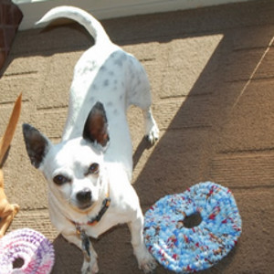 Flying Disc Dog Toy Crochet Pattern