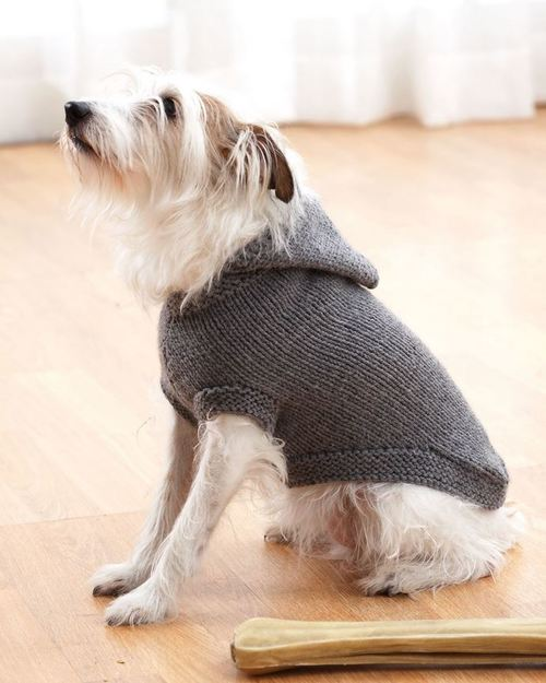 Sparkys Favorite Knit Sweater