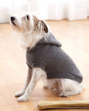 Sparky's Favorite Knit Sweater