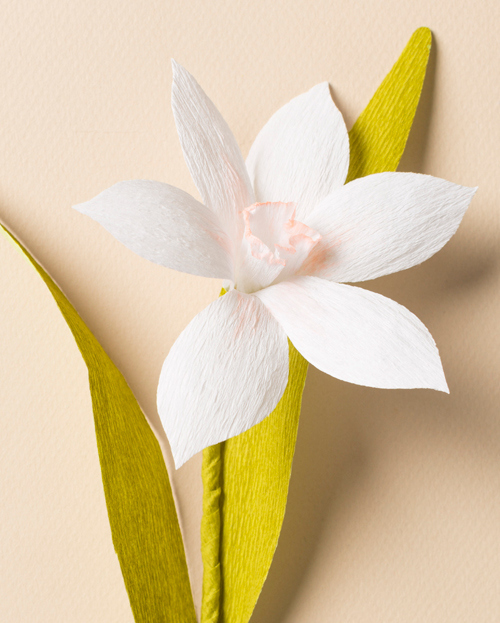 Paper Narcissus Flower