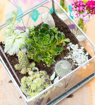Unbelievable Terrarium Centerpiece