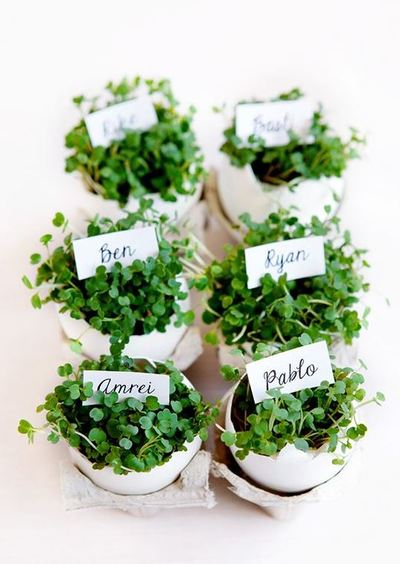 Eggshell Planter Place Cards