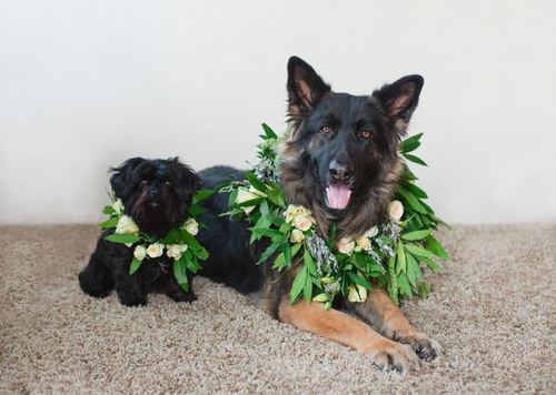 Pawesome Dog Wreath