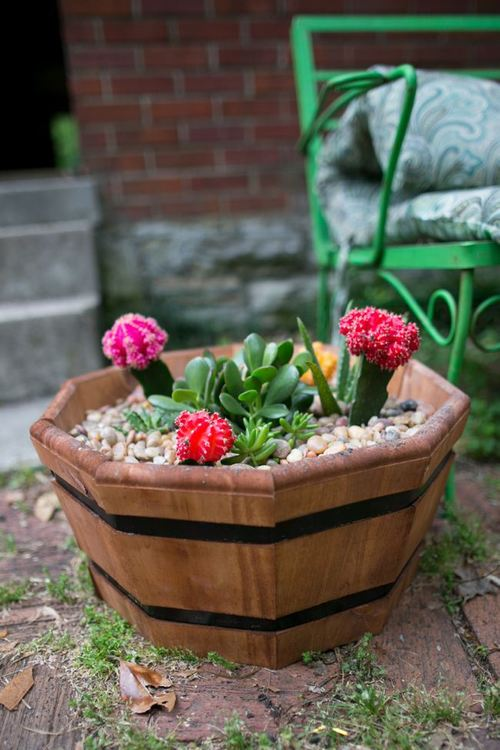 Succulent DIY Garden Projects