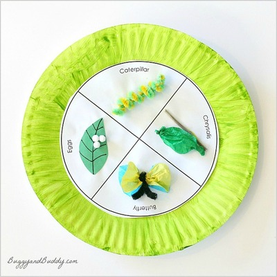 Butterfly Life Cycle Educational Art Craft