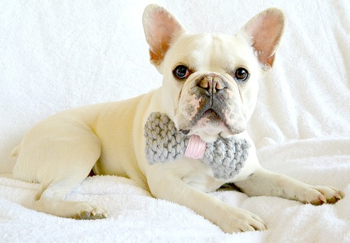 Simply Adorable Dog Bow Tie and Pom Collar