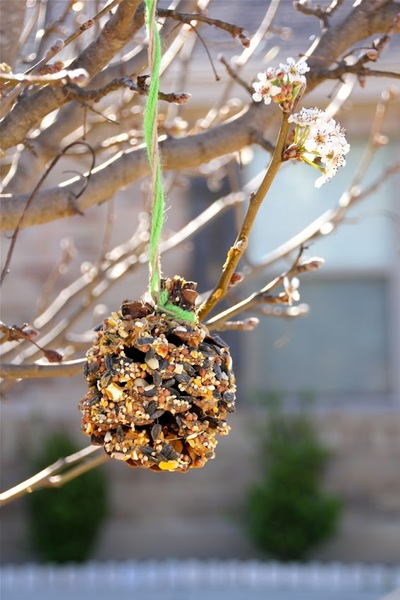 Quick Pine Cone Bird Feeders