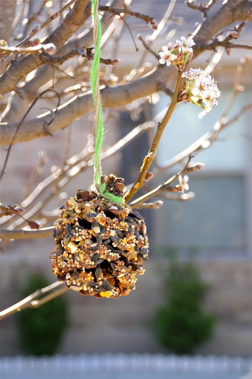 Quick Pinecone Bird Feeders