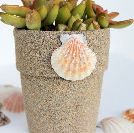 Beachy Sand Covered Flower Pots