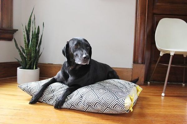 Washable DIY Dog Bed