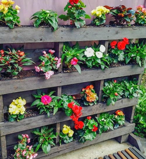 Vertical pallet garden for Gardening using pallets