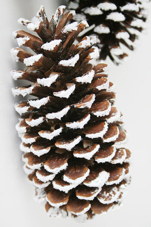 Breathtaking Frosted Pinecone Decor