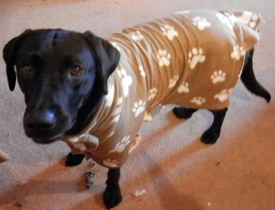 d5d811360204 Winter Dog Coat | AllFreeSewing.com