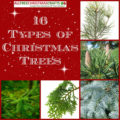 16 Types of Christmas Trees | AllFreeChristmasCrafts.com