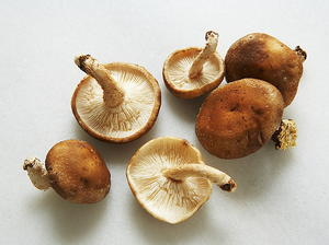 Simmered Shiitake Mushrooms
