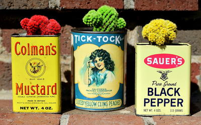 Vintage Tins and Succulents DIY Planters