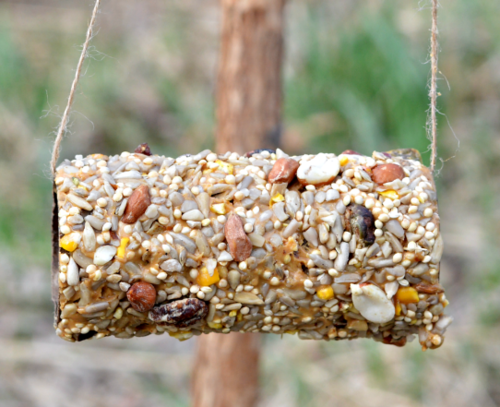 Toilet paper roll bird feeder for Toilet paper tube bird feeder