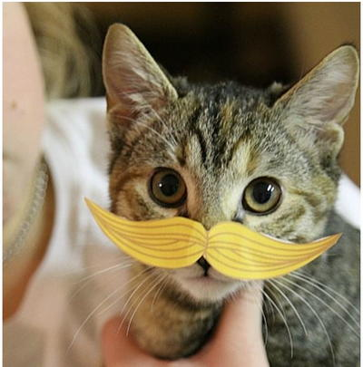 Hilarious Cat Mustache Printables