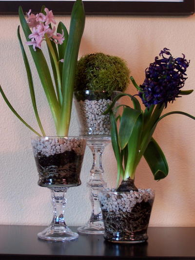 Glass Pedestal Flower Holders