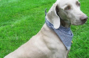 photo about Dog Coat Sewing Patterns Free Printable identify AllFreeSewing - 100s of No cost Sewing Designs